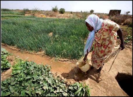 Image result for Boosting food security via biotechnology