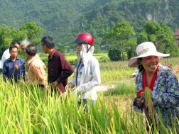 Vietnam_Rice Field Scene