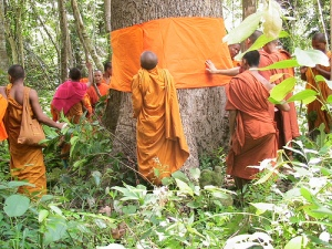 Cambodian Monks and Trees